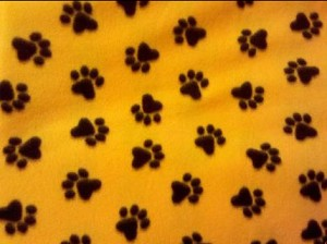 Paws on Yellow